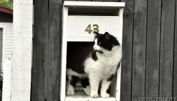 Novozélandská poštovní kočka