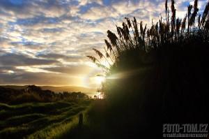 Nový Zéland, travina v protisvětle