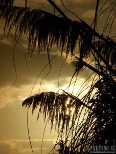 Západ slunce s trávou