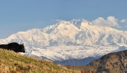 Panorama - Himaláje a Yak