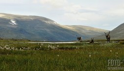 Norsko, park Jotunheimen, panorama se soby