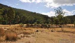 Austrálie, Tasmánie - klokani