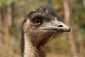 Austrálie, Tasmánie - pták EMU