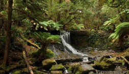 Tasmánie - prales s potokem