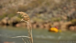 Výprava Colorado 2013 - Grand Canyon - fotka číslo 229