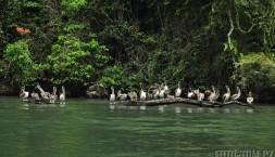Všude samý pelikán, kam se člověk podíval