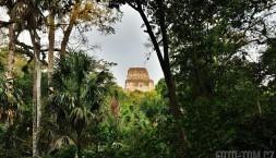Májské ruiny Tikal, nejvyšší pyramida (HDR)