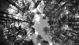 Pohled rybím okem do korun stromů :-)