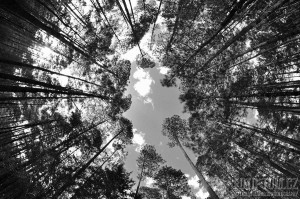 Abstraktní pohled do korun stromů