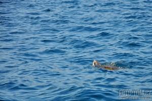 Mořská želva, Mexiko, Tichý oceán