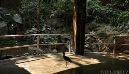 Ve městě Tuxtla v Mexiku mají Zoomat - zoo s lidma ve výběhu a zvířata chodí koukat
