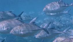 Šnorhlujeme a fotíme u korálového útesu Bar Reef
