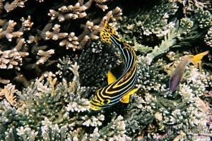 Korálové útesy Srí Lanky