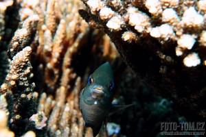Korálové útesy a rybka