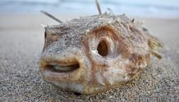 Tahle ryba už toho moc nenaplave