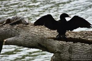Pták provokatér