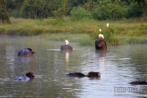 Safari v parku Uda Walawe - Srí Lanka