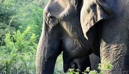 Moudrý sloní úsměv pro fotografa