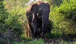 Hele ho, sloního drobečka!
