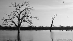 Stromy, ptáci a jezero