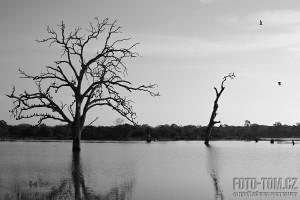 Černobílá fotka - strom a jezero