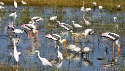 Všude samej pelikán