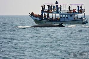 Pozorování velryb Srí Lanka