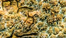 Na závěr ještě jeden korál, hrají všema barvama