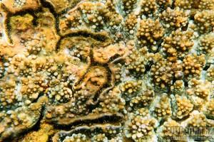 Korálový útes na Srí Lance