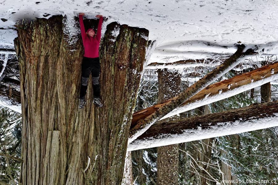59/365 Středa 11.11., v Kanadě státní svátek Rememberance day (svátek na počest válečným veteránům). Pro nás další příležitost vyrazit někam na výlet po blízkém okolí. Tentokrát jsme se vydali do Cougar mountain (cougar = puma), kde jsme zašli k jezerům (zas jezera, co? Těšte se na wallpaper v emailu!) a kde jsou také až tisícileté obří stromy Cedar (neplést, není to Čedar, je to v češtině Cedr). Nezdá se vám to celé na hlavu postavené?