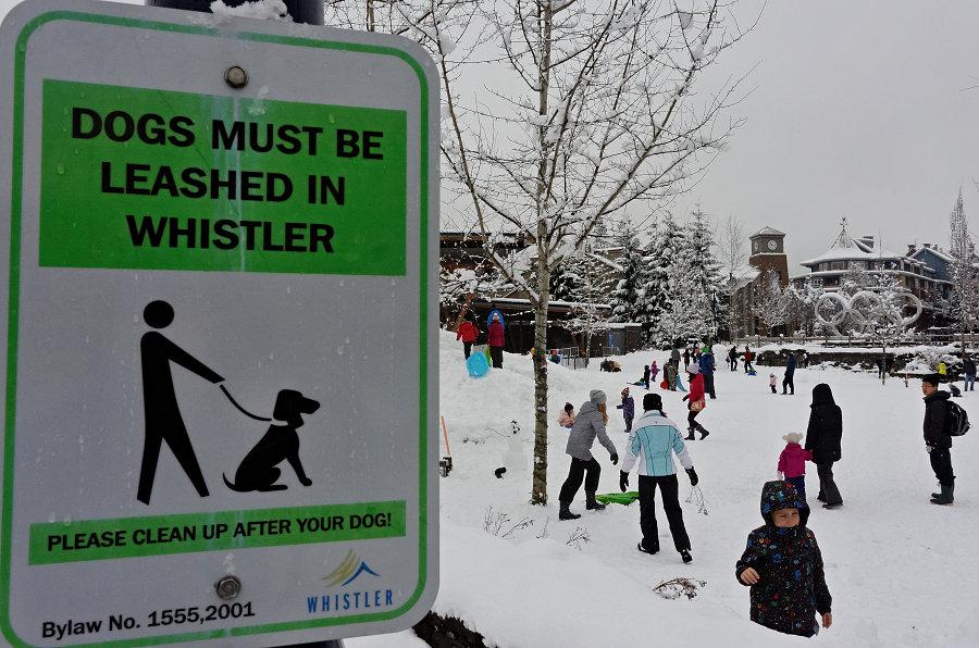 """92/365 Tak to vidíte, správně by tu děti vůbec neměly pobíhat navolno. Naštěstí většina rodičů tyhle značky ignoruje a děti vesele bobují a sáňkují sami na uměle vytvořeném kopci přímo v centru města. Jen nechápu, proč na tom obrázku to dítě vypadá spíš jako pes. Nebo """"dogs"""" neznamená kanadsky dítě?"""