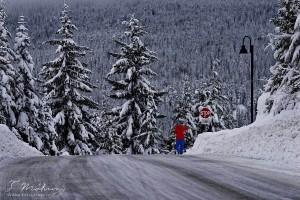 113/365 Po dlouhé době nám zase sněží, hurá! :-)