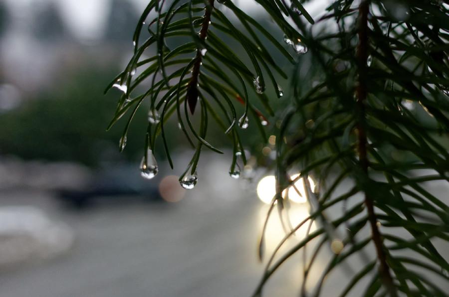 155/365 - Pondělní zmoklá větvička je naprosto charakteristická pro celý 23. týden, jakoby zima už definitivně odešla, leje a leje a taje a taje (tedy u nás dole, nahoře na kopcích sněží a sněží a sněží)